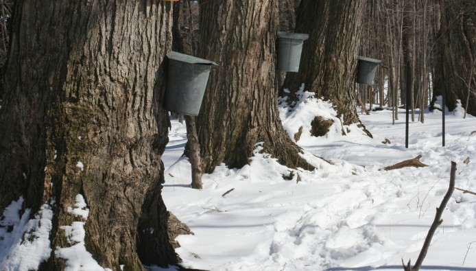 maple_sap_buckets_-_beaver_meadow_audubon_center
